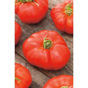 Tomaten Marmande VR