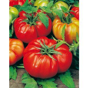Tomaten Beefmaster VFN F1