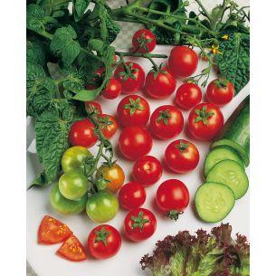 Tomaten Sweet 100 F1 (kerstomaat)