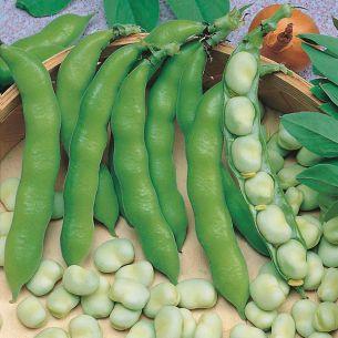Tuinbonen Suprifin 50 gram
